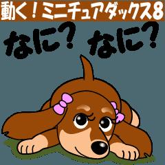 動く!ミニチュアダックス8