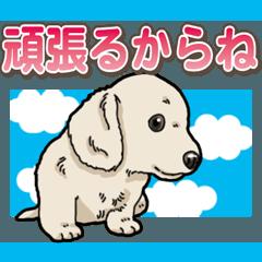 わんこ日和 ミニチュアダックスフンド仔犬