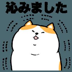 丁寧なデブ猫