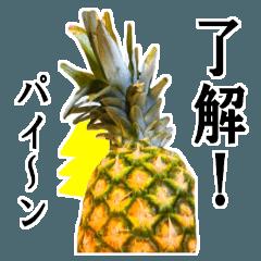 【実写】パインパインパイナポー