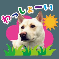 和犬わっしょいの日常スタンプ