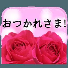 暮らしに花を♪バラ