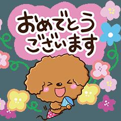 お花とトイプードル