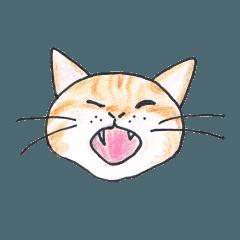 100ニャンズの猫さんたち